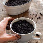 Cách trồng cây bạc hà không tốn kém mà đuổi muỗi lại cực tốt