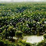 Sự hồi sinh kỳ diệu của Vườn Quốc gia Tràm Chim