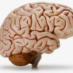 10 sự thật thú vị về bộ não