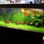 Cách nuôi cá cảnh theo phong thủy