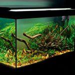 Ánh sáng cho bể thủy sinh và hệ thống đèn
