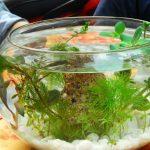 Bể cá mini đẹp để bàn và cách làm đơn giản