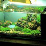 Cách làm bể cá cảnh thủy sinh đẹp