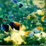 Tại sao ngắm cá cảnh lại tốt cho sức khỏe