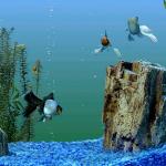 Có nên dán phong nền cho bể cá cảnh?