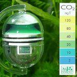 CO2 cho hồ thủy sinh và chất lượng nước