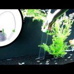 Cách vệ sinh bể cá cảnh hiệu quả và nhanh chóng