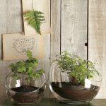 Các loại chậu thủy tinh đẹp để trồng cây trong nhà