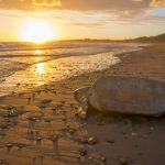 Rùa non Glapagos quý hiếm lần đầu chào đời sau hơn 100 năm