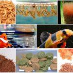 Những loại thức ăn dinh dưỡng cho cá