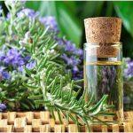 Tăng cường trí nhớ bằng cây hương thảo
